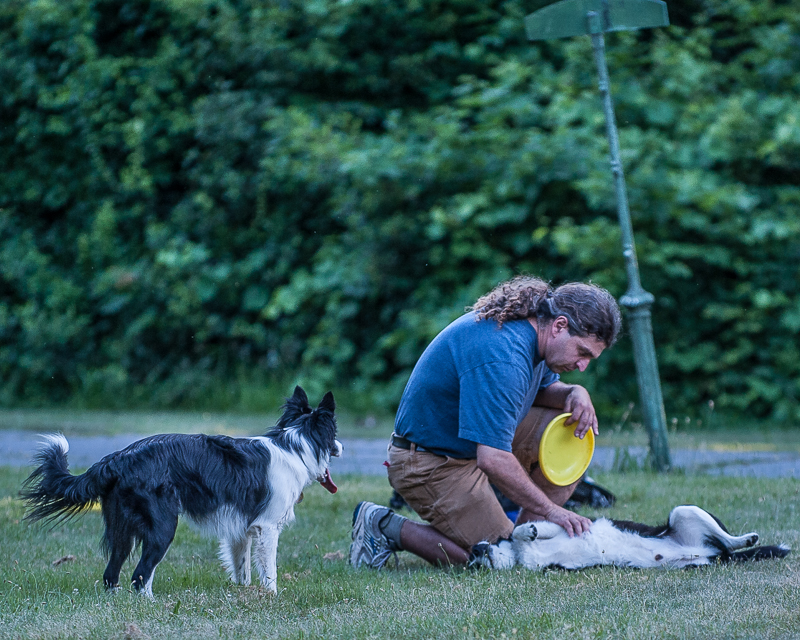 Man kneeling with frisbee and two dogs