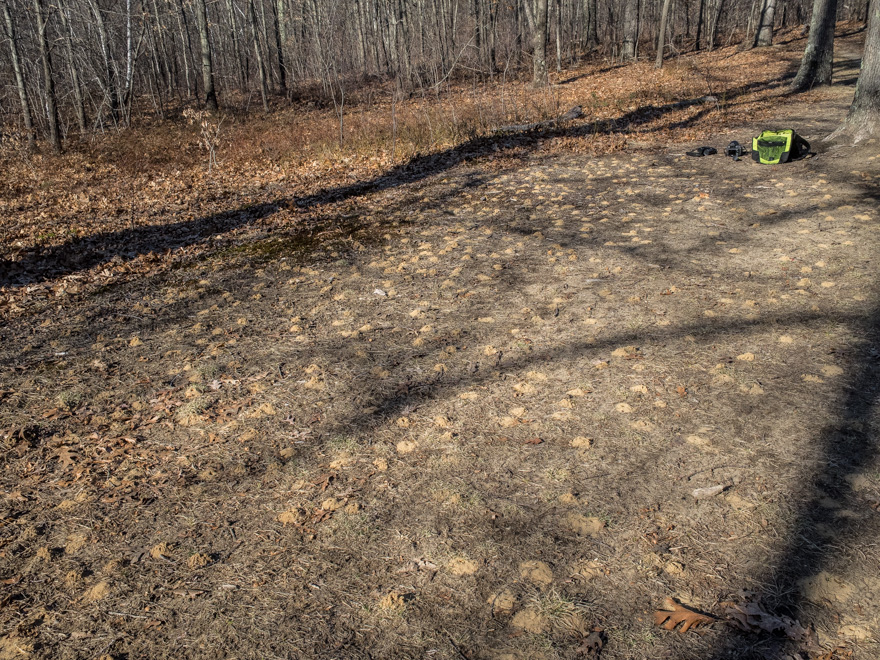 Clearing at Cutler Park with insect mounds