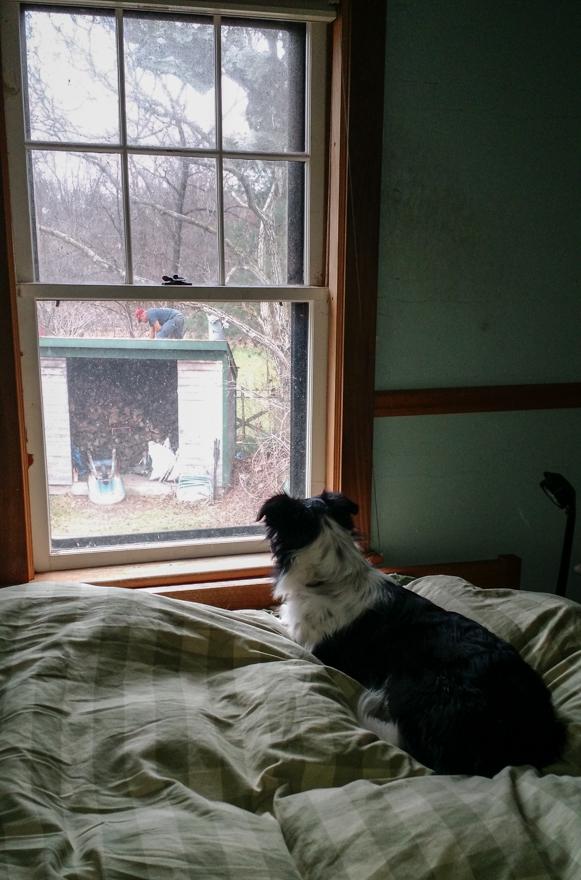 Cass watching roofer at work