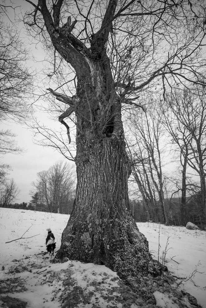 20170131 hollow oak-5006
