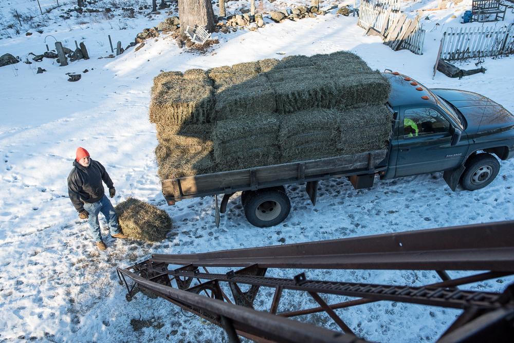hof-20170105-hay-delivery-3397