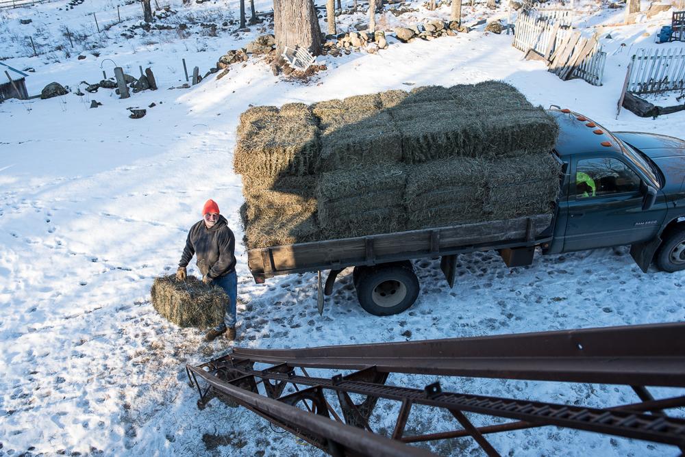 hof-20170105-hay-delivery-3405