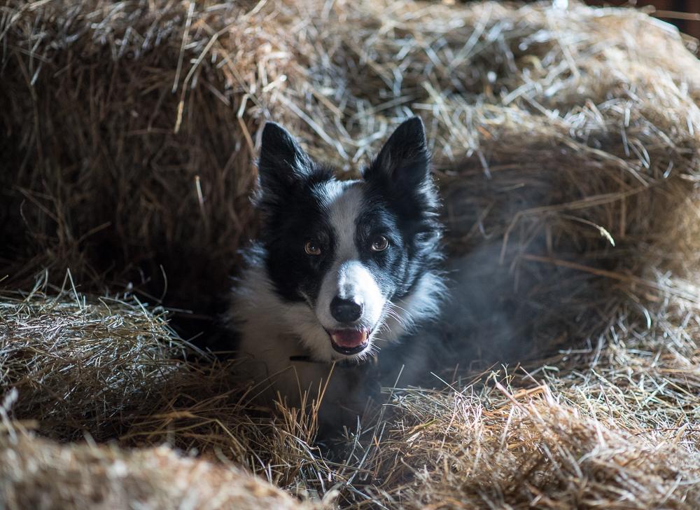 Luc in hay loft