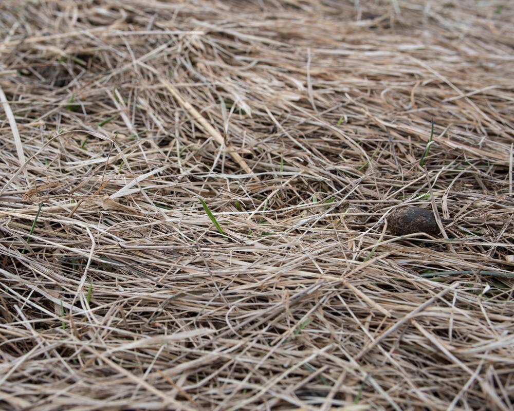 first grass-7661