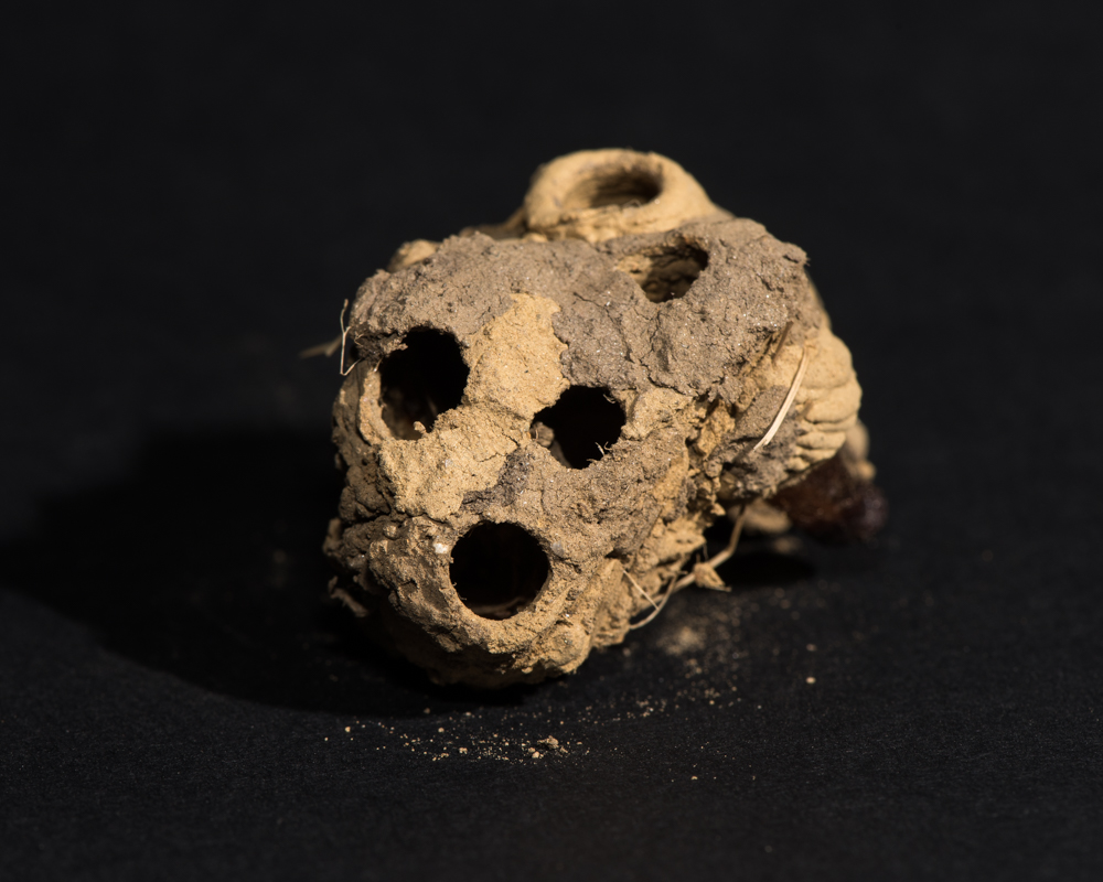 mud wasp nest-1141