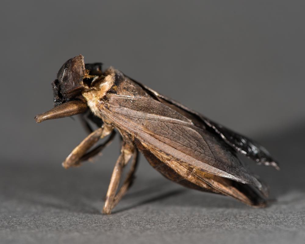 cicada macro-1250