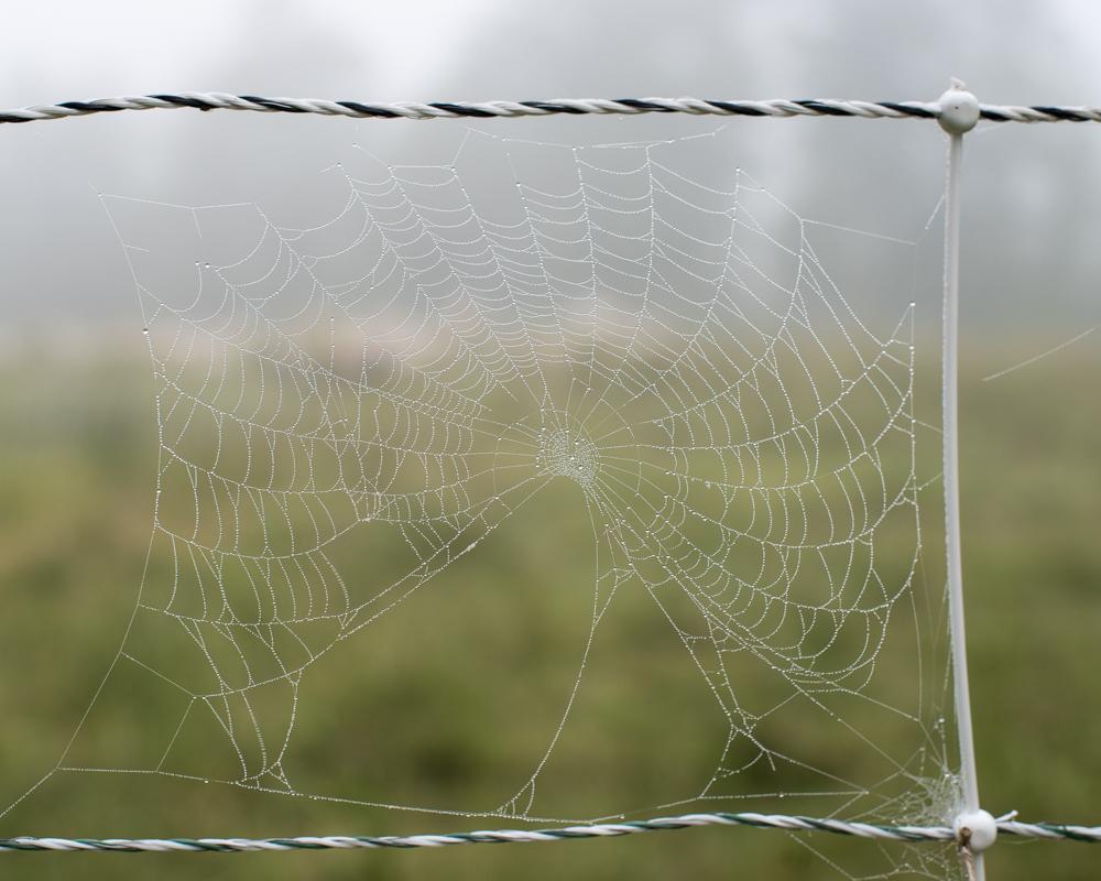 Electronet spiderweb-0323