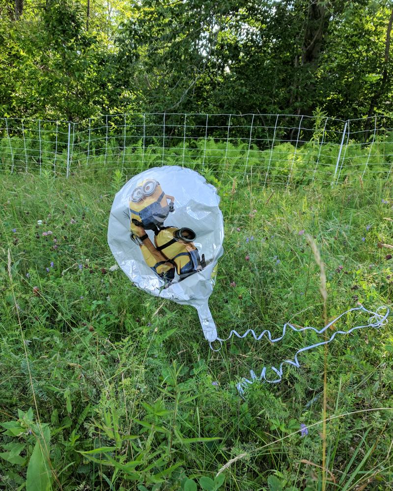 Mylar balloon in field-17-2