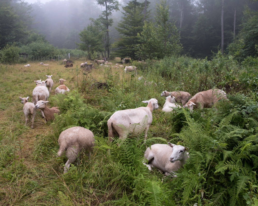 Smith back pasture-0856