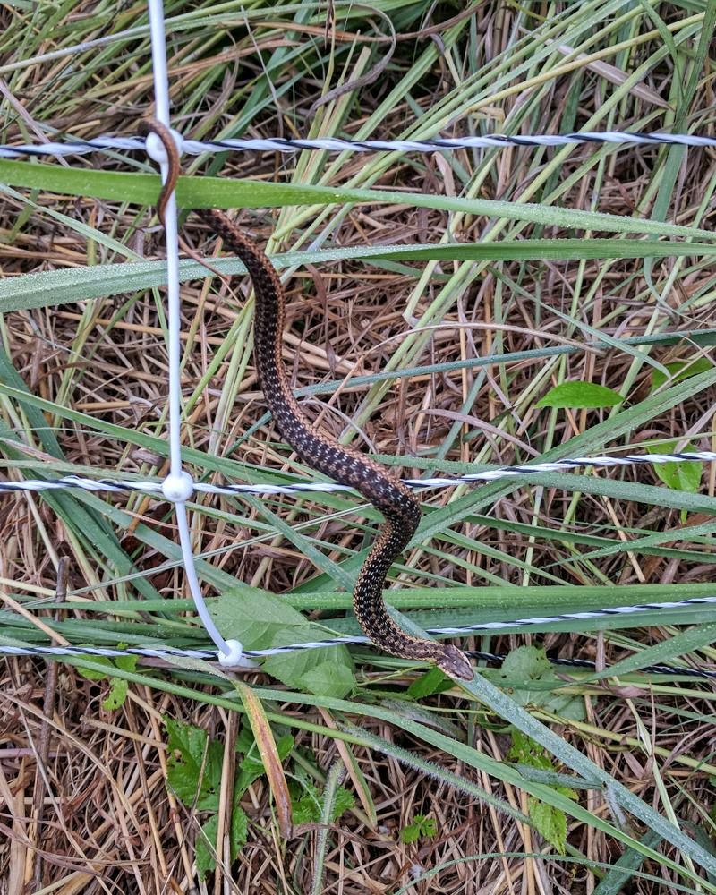 Snake in electronet-3
