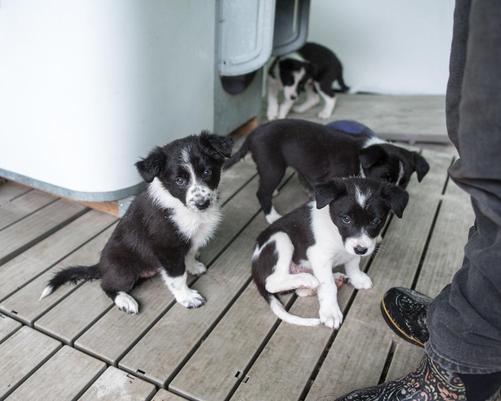maria's pups-1560