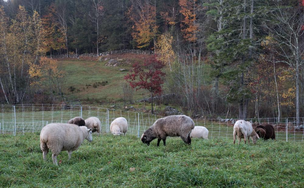 Flock at Holt Road-2724