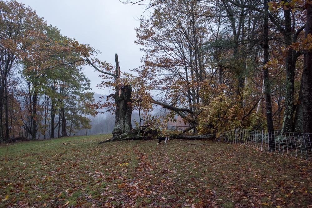 Hollow oak demise-2080
