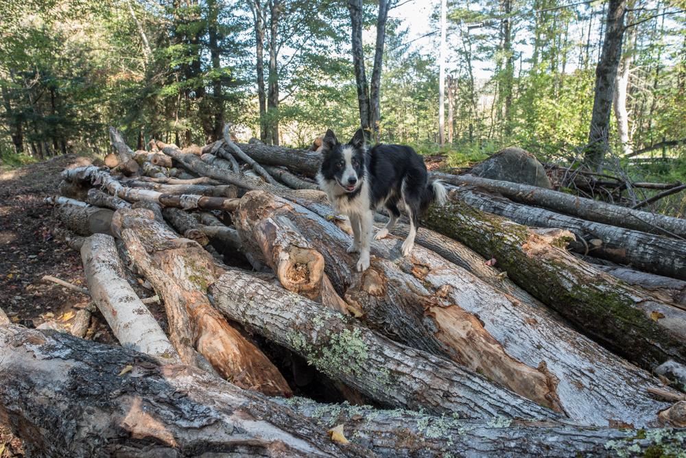 firewood again-2132