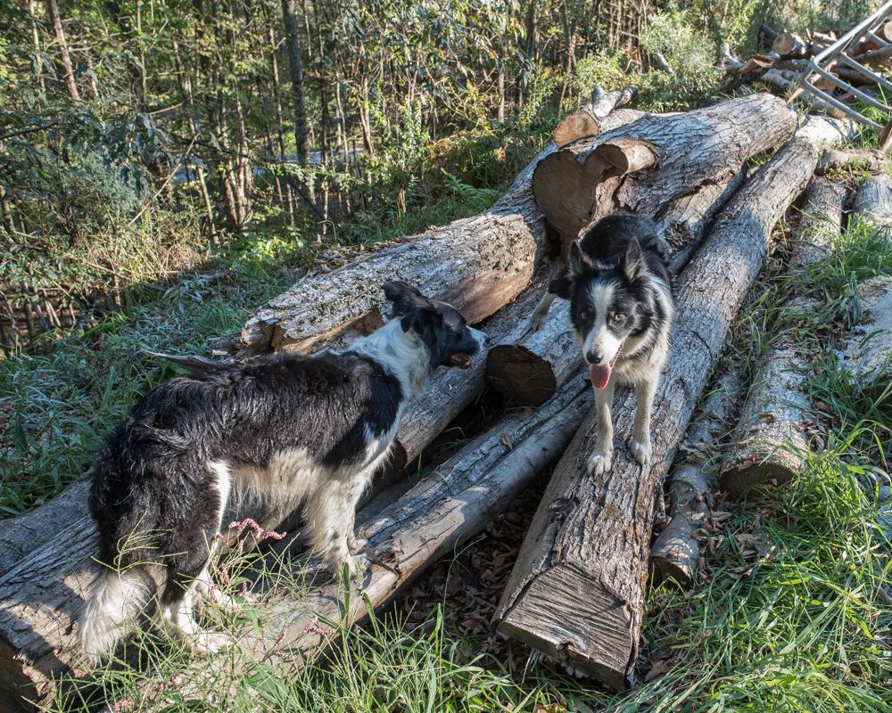firewood again-2140