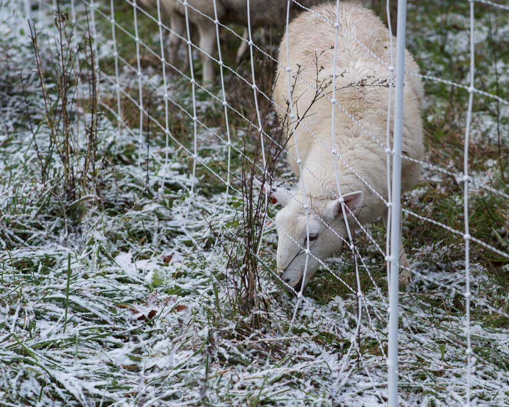 first snow 20171108-2353
