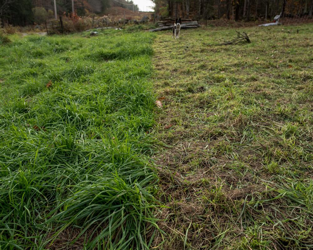 grazing boundary-2190