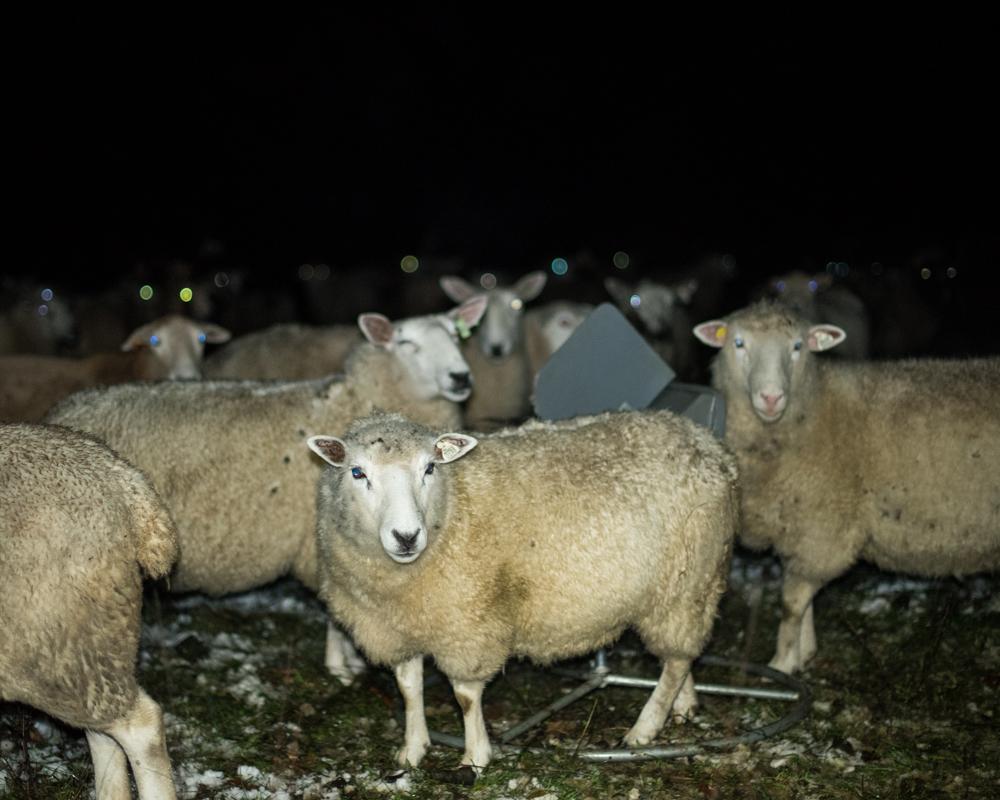 night flock-2510