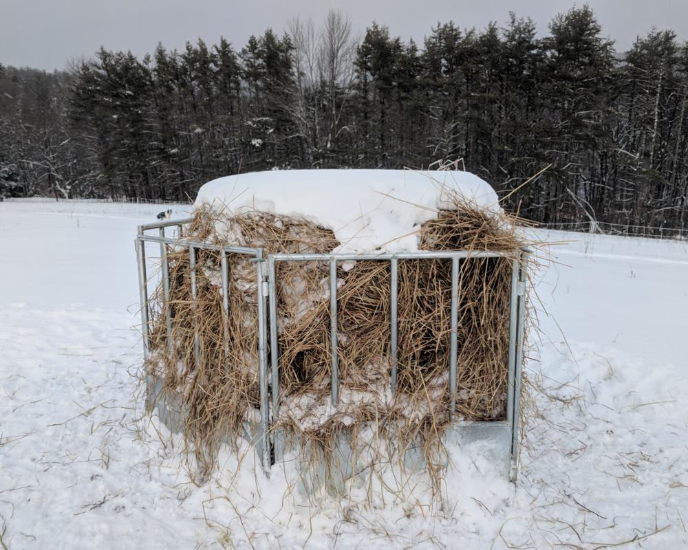 Nick's hay-21-2-2