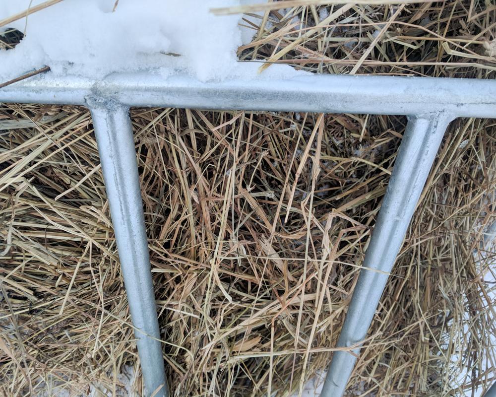 Nick's hay-21-3-2