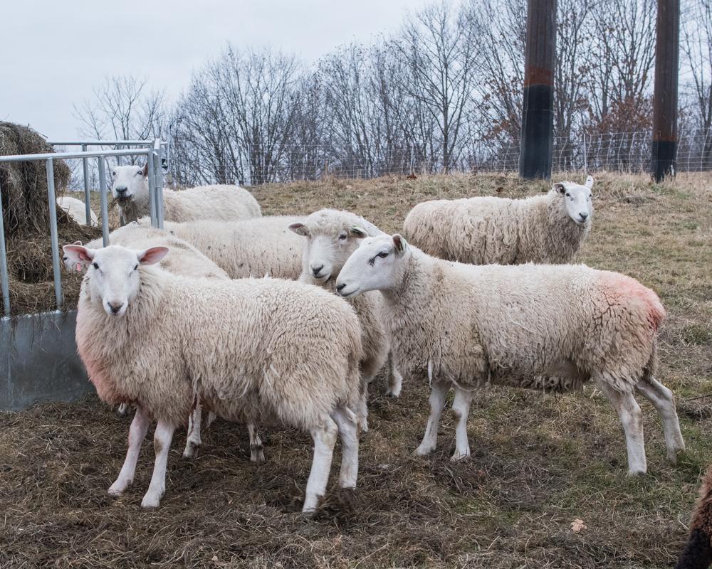 breeding sort-3277