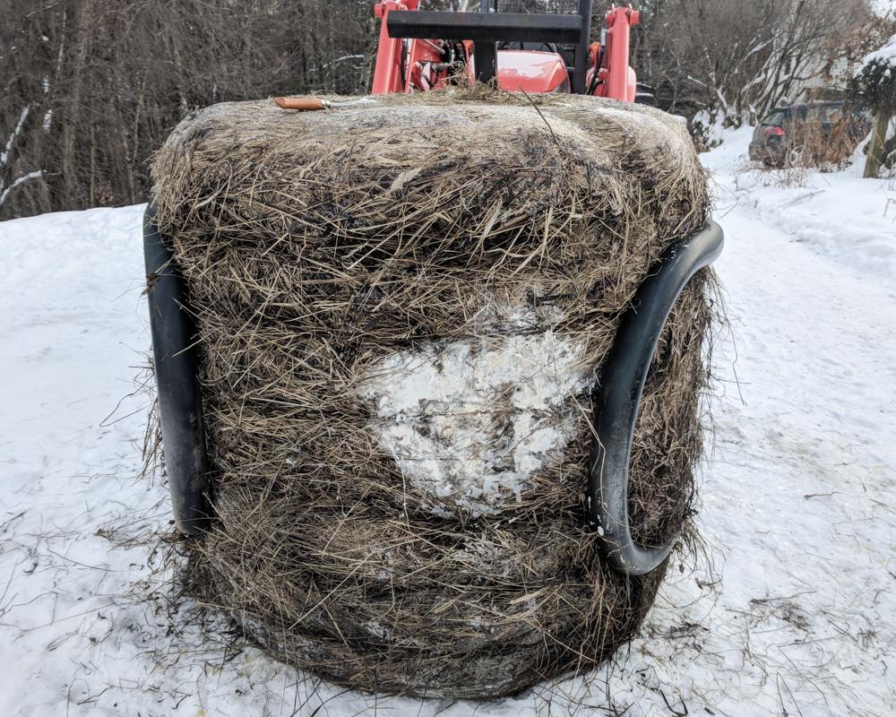 moldy hay--2